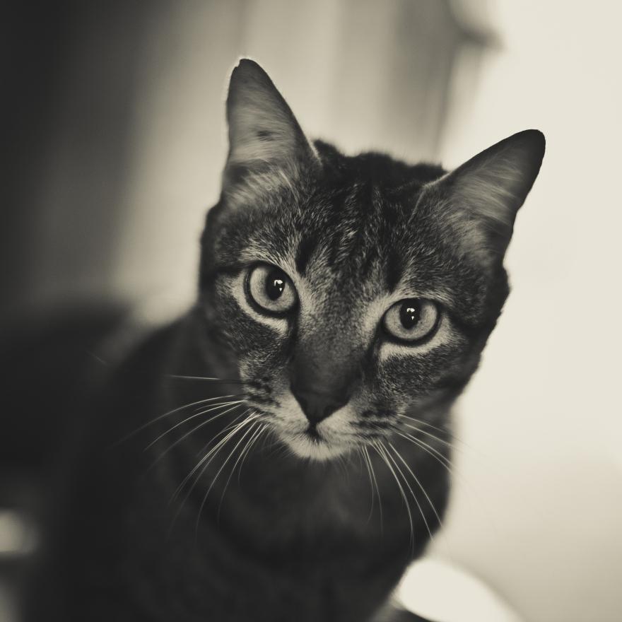 Cat in Palma